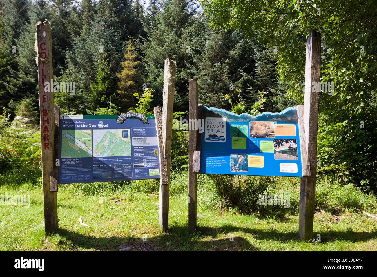 Information signs for the Beaver Trail in Knapdale Forest, Argyll & Bute, Scotland UK Stock Photo