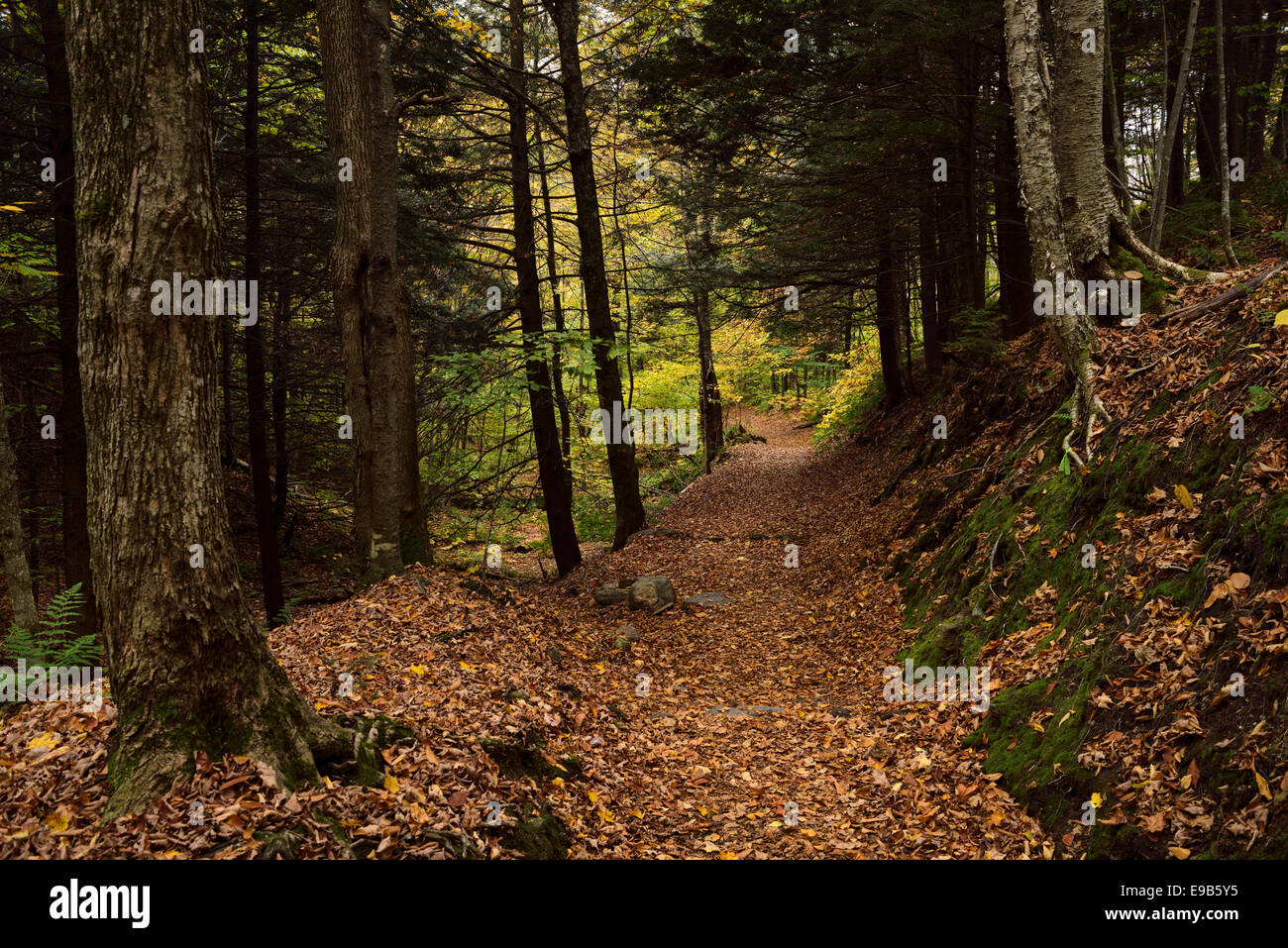 Forest path to Bingham Falls Stowe Vermont with fallen leaves Stock Photo