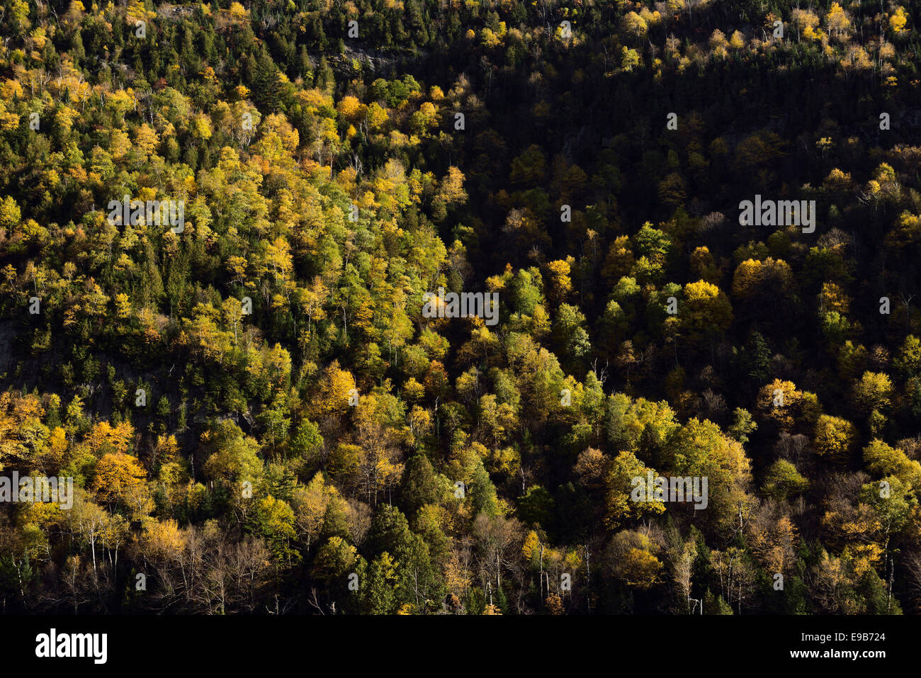 Sidelit trees on the steep slope of Cascade mountain at the Lower Lake in Adirondack Park New York - Stock Image