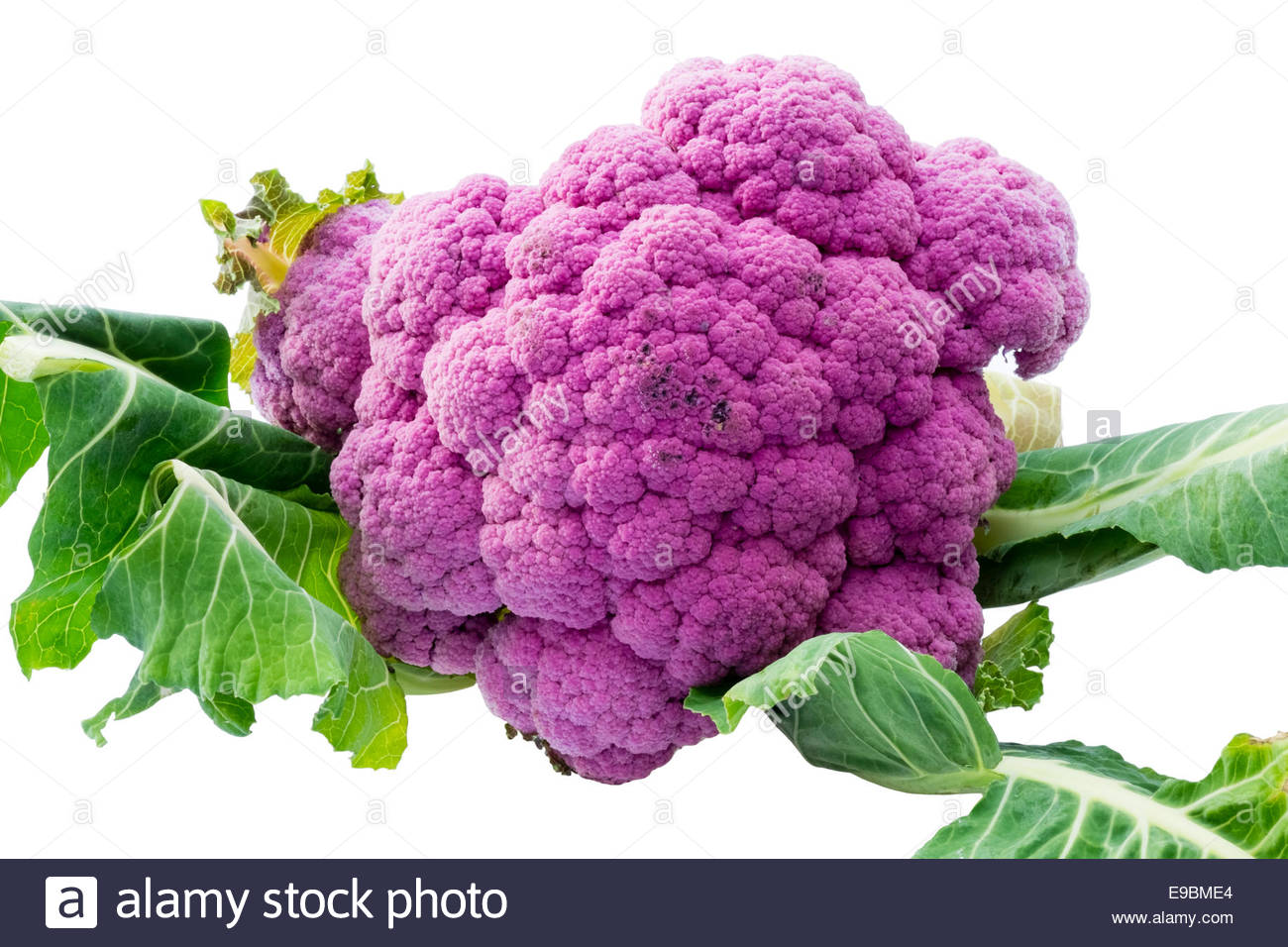Purple cauliflower, photographed against a white background. - Stock Image