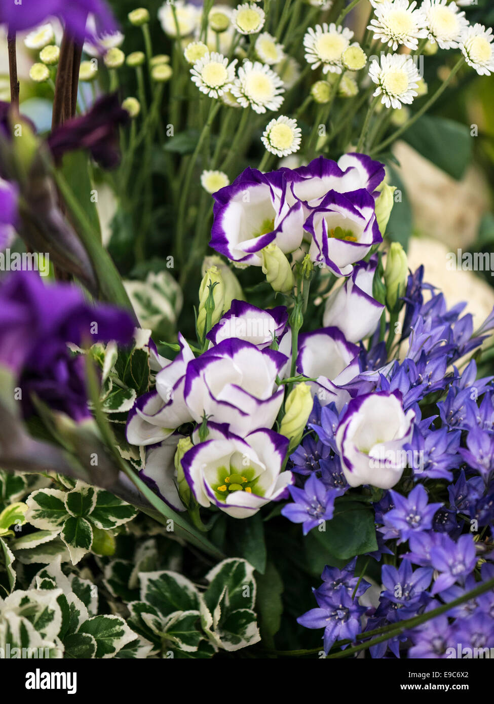 Mixed bouquet of beautiful purple, blue and white flowers - Stock Image