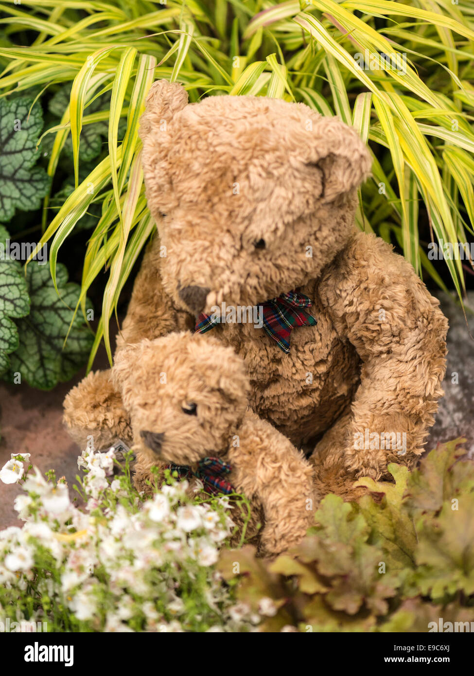 Garden Teddy Bears amongst white flowers and green foliage - Stock Image