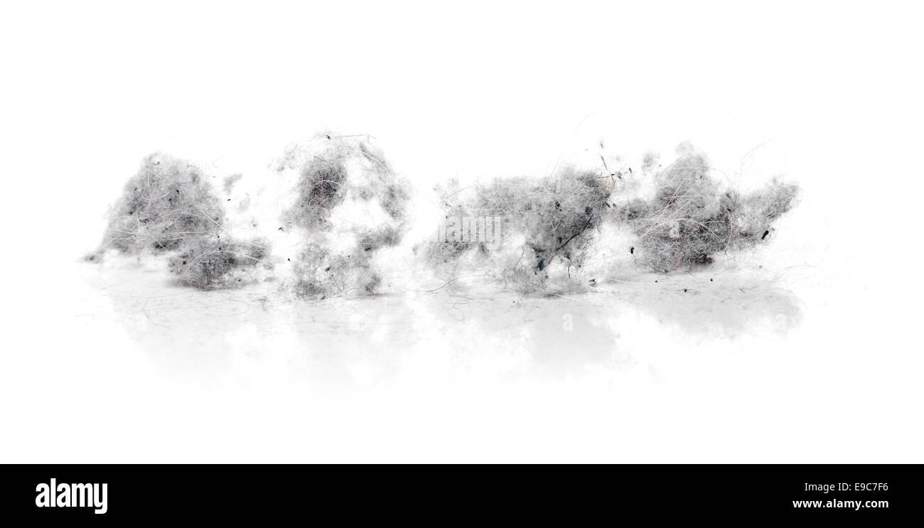 Dust bunnies on white reflecting background - Stock Image