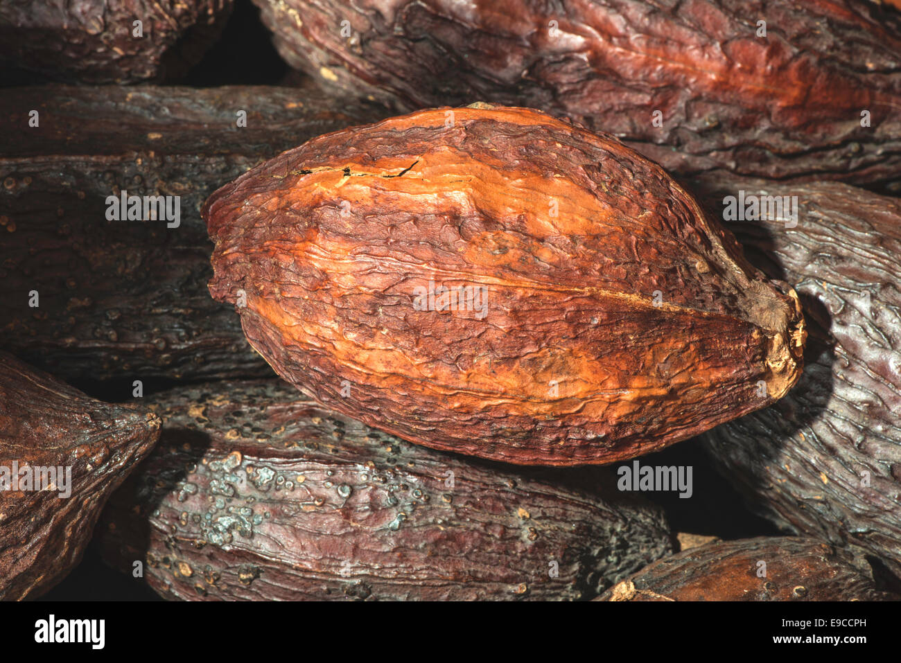 Cocoa pods and bonbons - Stock Image