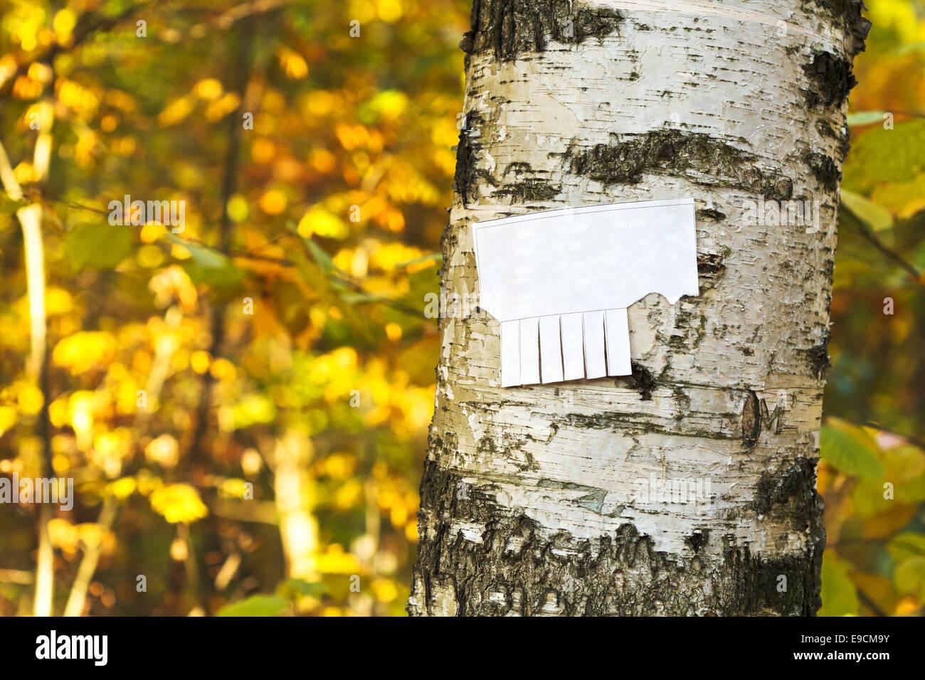 tear-off paper notice on birch trunk in autumn urban park - Stock Image