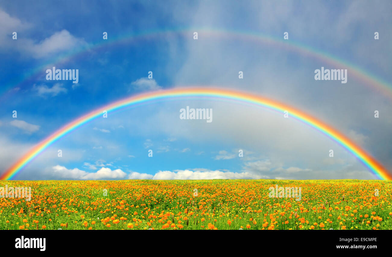 Landscape with blossoming field and rainbow - Stock Image