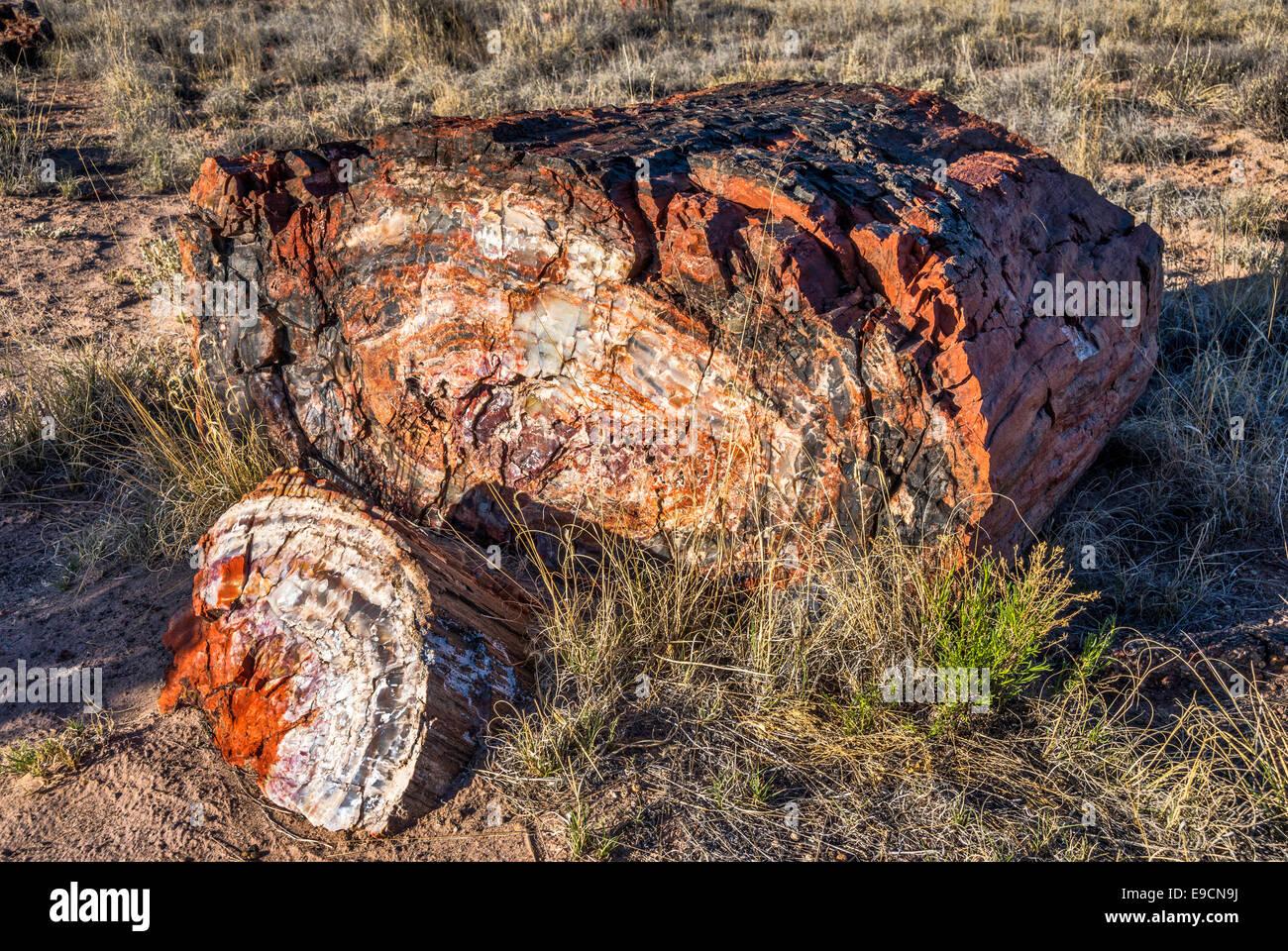 Petrified wood on Long Logs Trail, Petrified Forest National Park, Colorado Plateau, Arizona, USA - Stock Image
