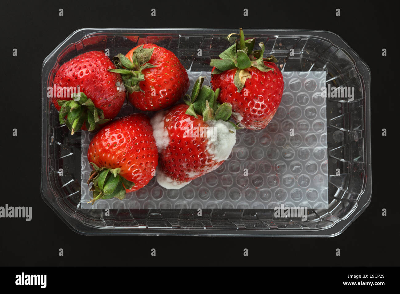 Moldy strawberries in a plastic package. Black background. - Stock Image