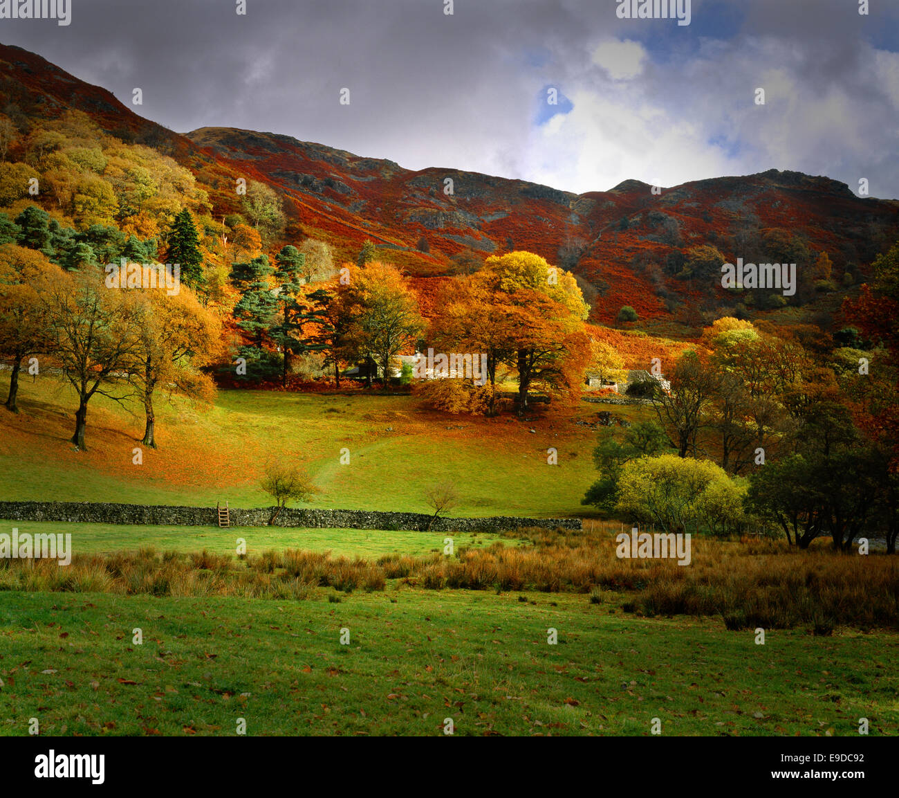 England: Autumn near Grasmere, Lake District, Cumbria - Stock Image