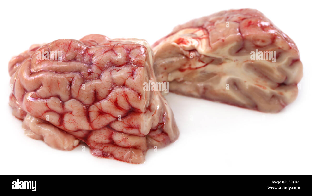 Brain of a cow over white background - Stock Image