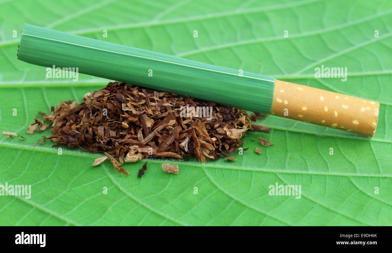 Dried tobacco leaves with cigarette on green leaf - Stock Image