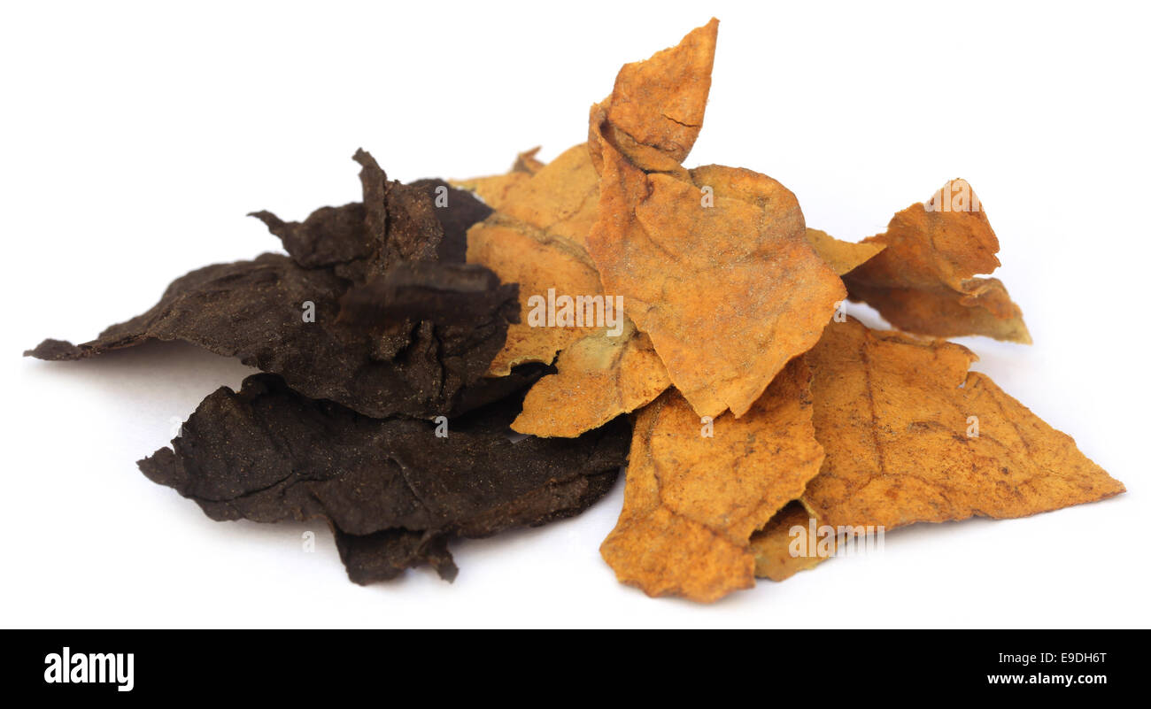 Dried tobacco leaves over white background - Stock Image