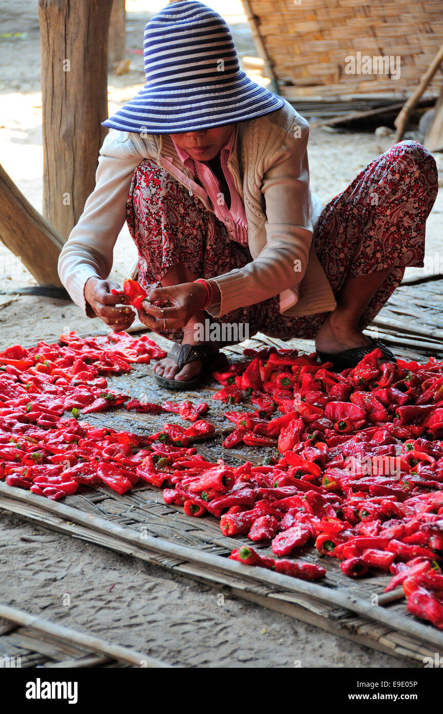 Woman grading dried chilli peppers under the stilt houses in Krong Kampong Chhnang, Cambodia - Stock Image