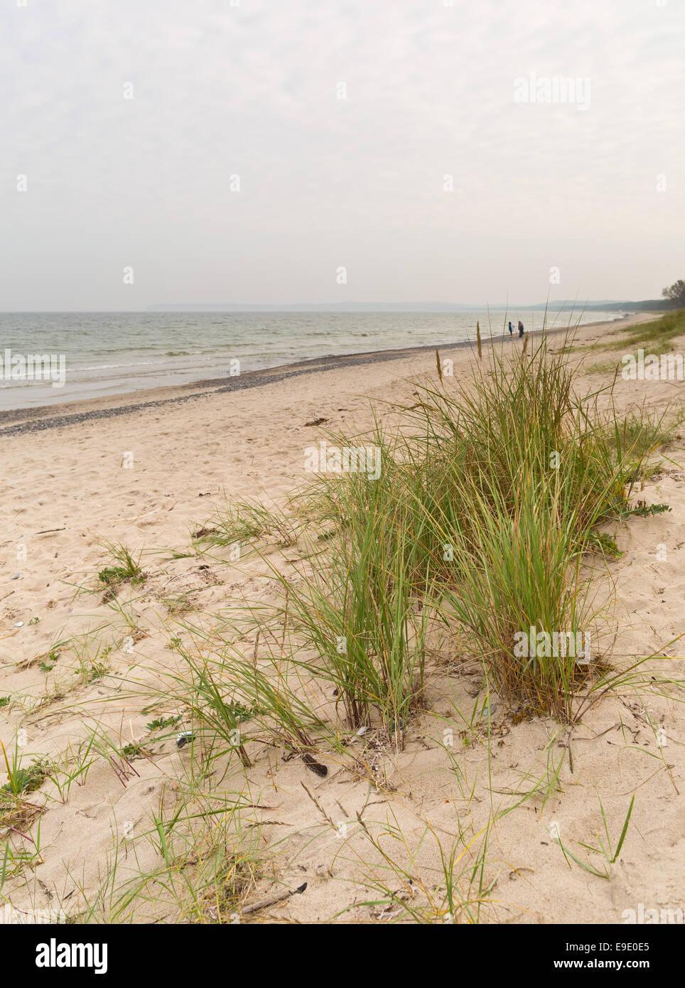 Marram at the beach near Prora, Ruegen, Germany, Europe - Stock Image