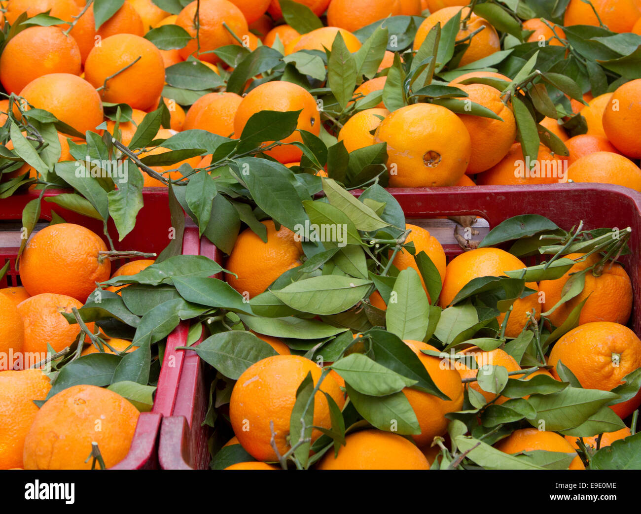 Baskets of Spanish oranges, scattered with orange leaves, in an open-air market in Almeria, Spain. Stock Photo