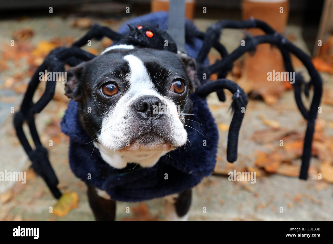 Dog Clothes Uk Stock Photos Dog Clothes Uk Stock Images Alamy