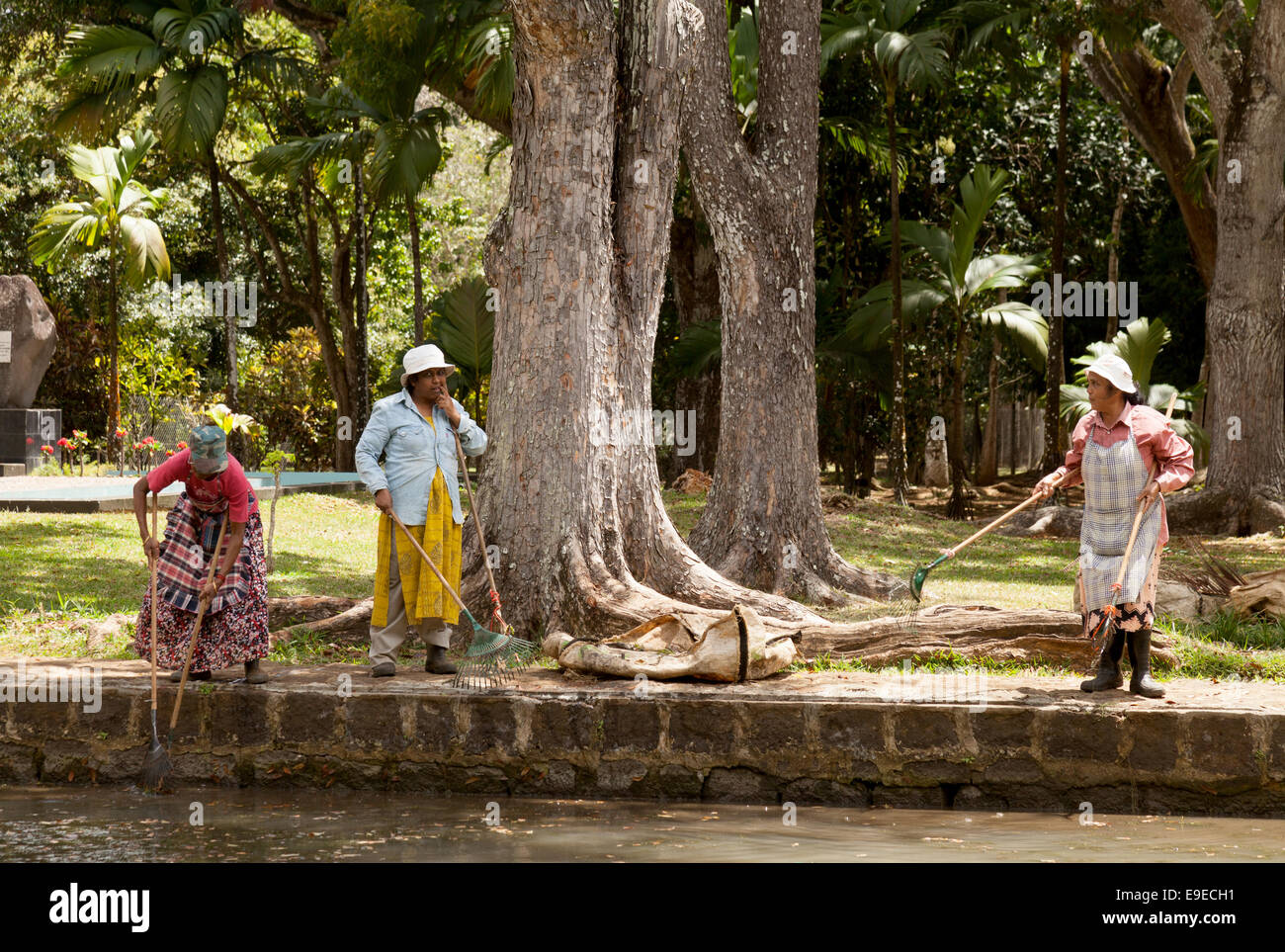 Local Women Working In The Botanical Gardens, Cleaning The Algae Out Of The  Lily Ponds, Mauritius