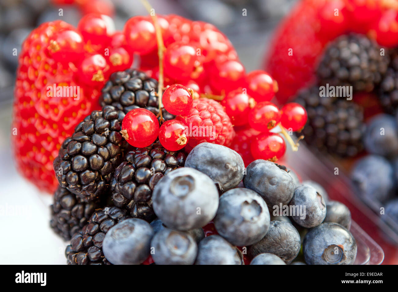 Different colorful berries blackberry blueberry strawberry raspberry fruit - Stock Image