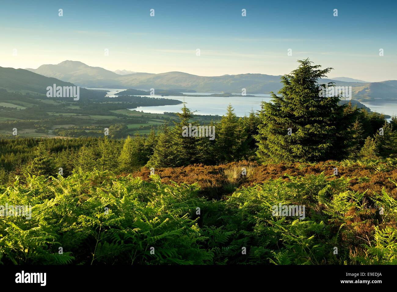 View to Ben Lomond from the John Muir way - Stock Image