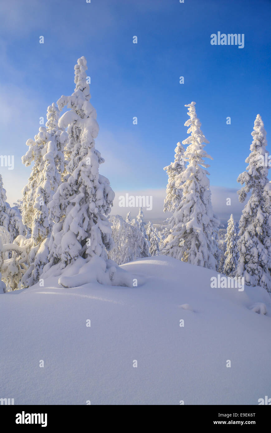 Picturesque view of trees almost completely hidden by snow - Stock Image