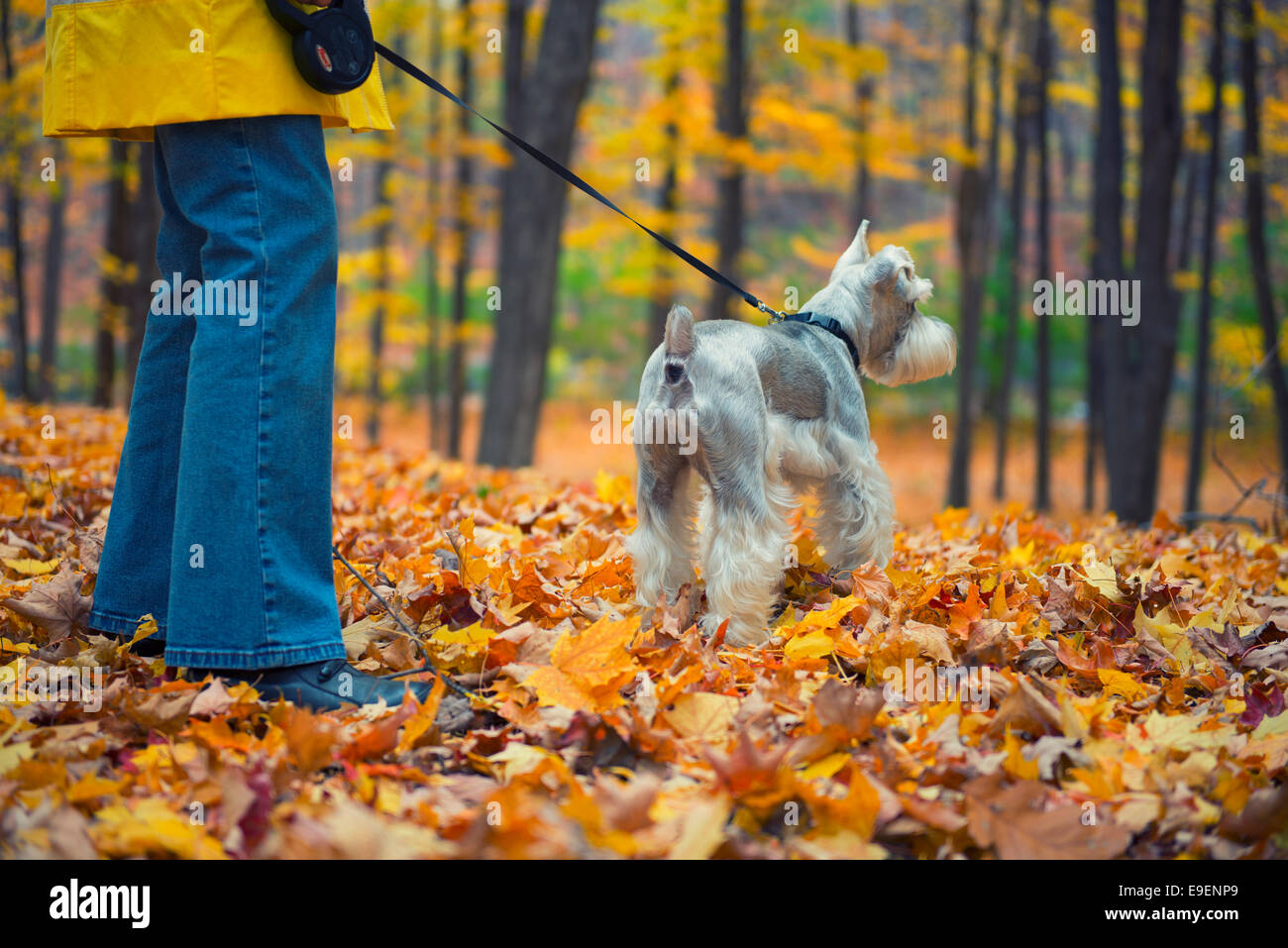 Autumn Fall Colors Colours Woman walking Dog in Park - Stock Image