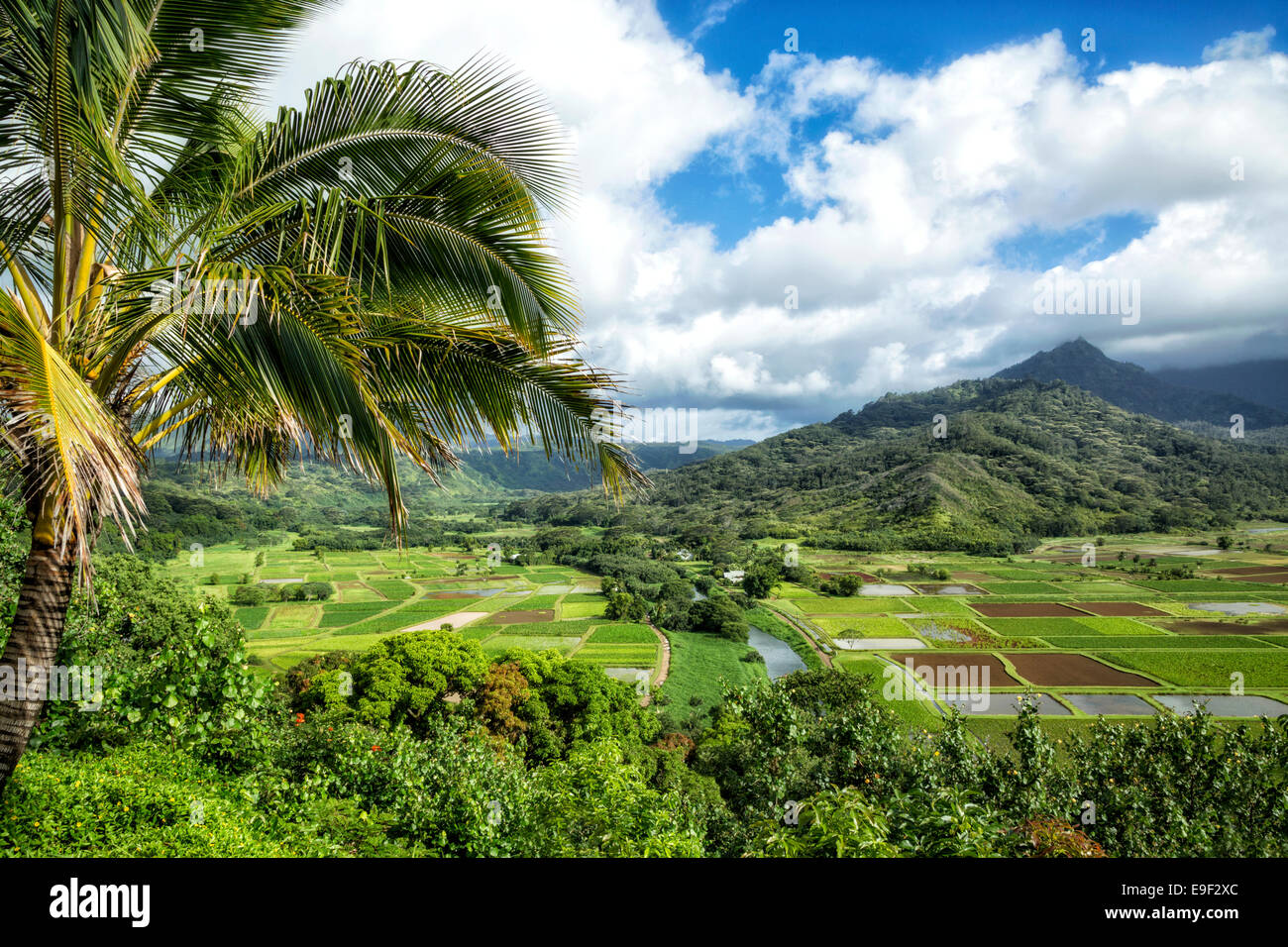 Nature scenery In Hanalei, Kauai - Stock Image