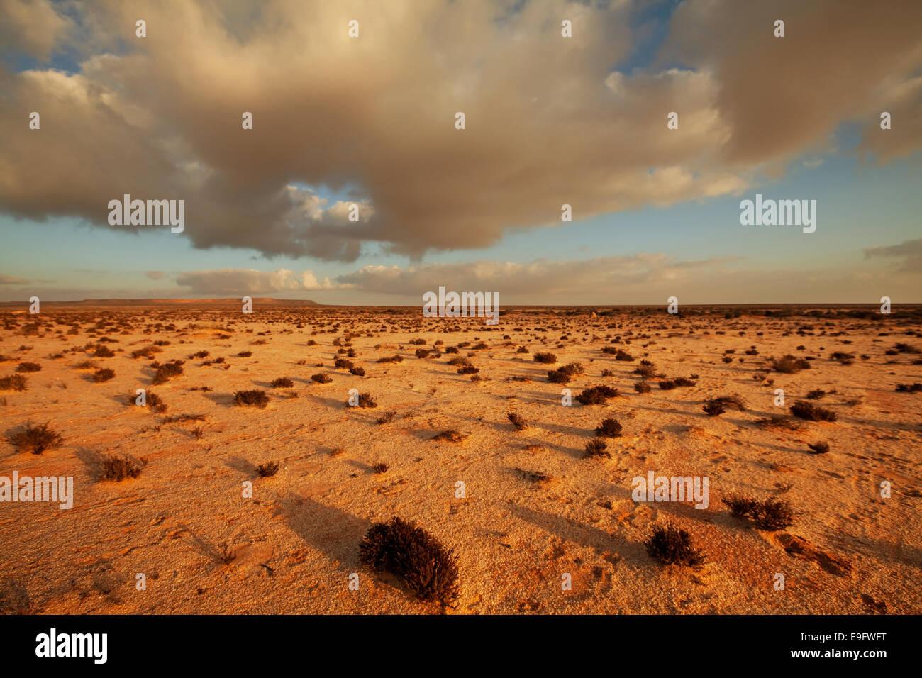 Desert in Western Sahara Stock Photo