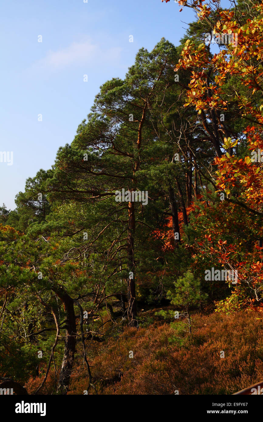 Autumn forest in the Pfalz Stock Photo
