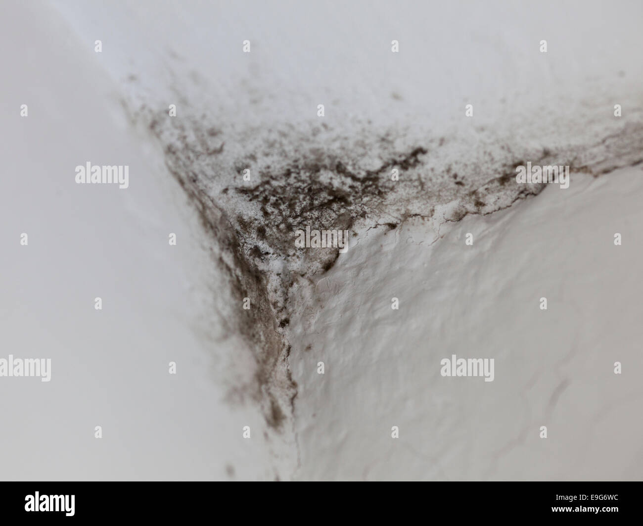 Mold in corner - Stock Image