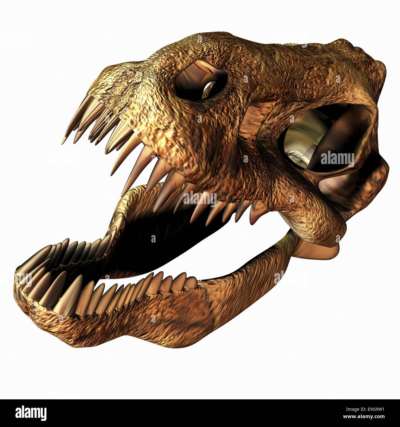 Tyrannosaurus Rex Anatomy Stock Photos & Tyrannosaurus Rex Anatomy ...