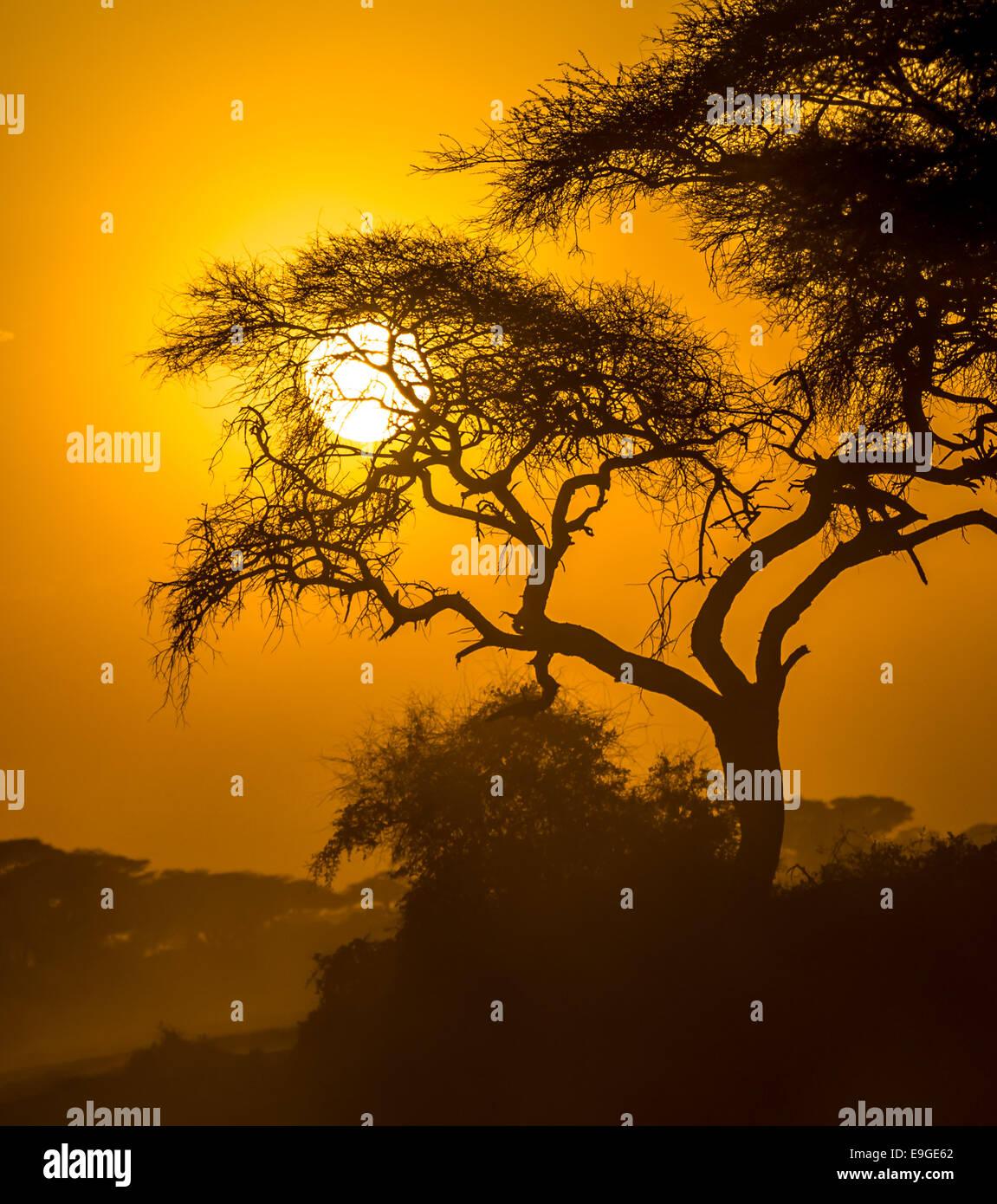 african sunset in savannah - Stock Image