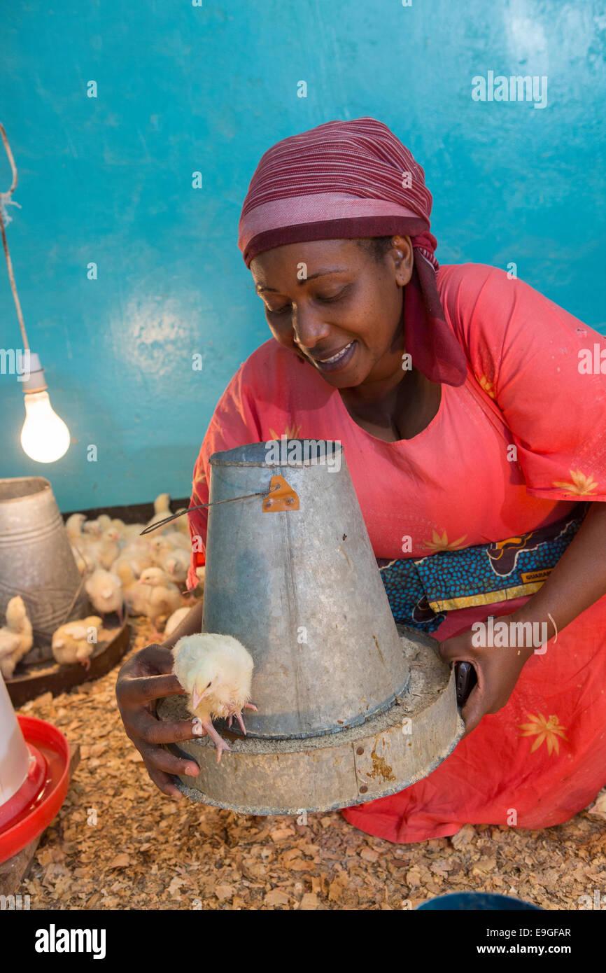 Chicken farm in Arusha, Tanzania, East Africa. - Stock Image