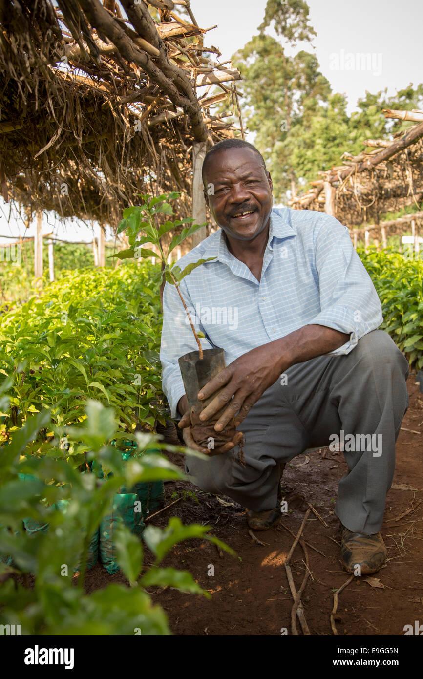 A farmer manages coffee seedlings in the Kabondo nursery in Rachuonyo South, Kenya. - Stock Image