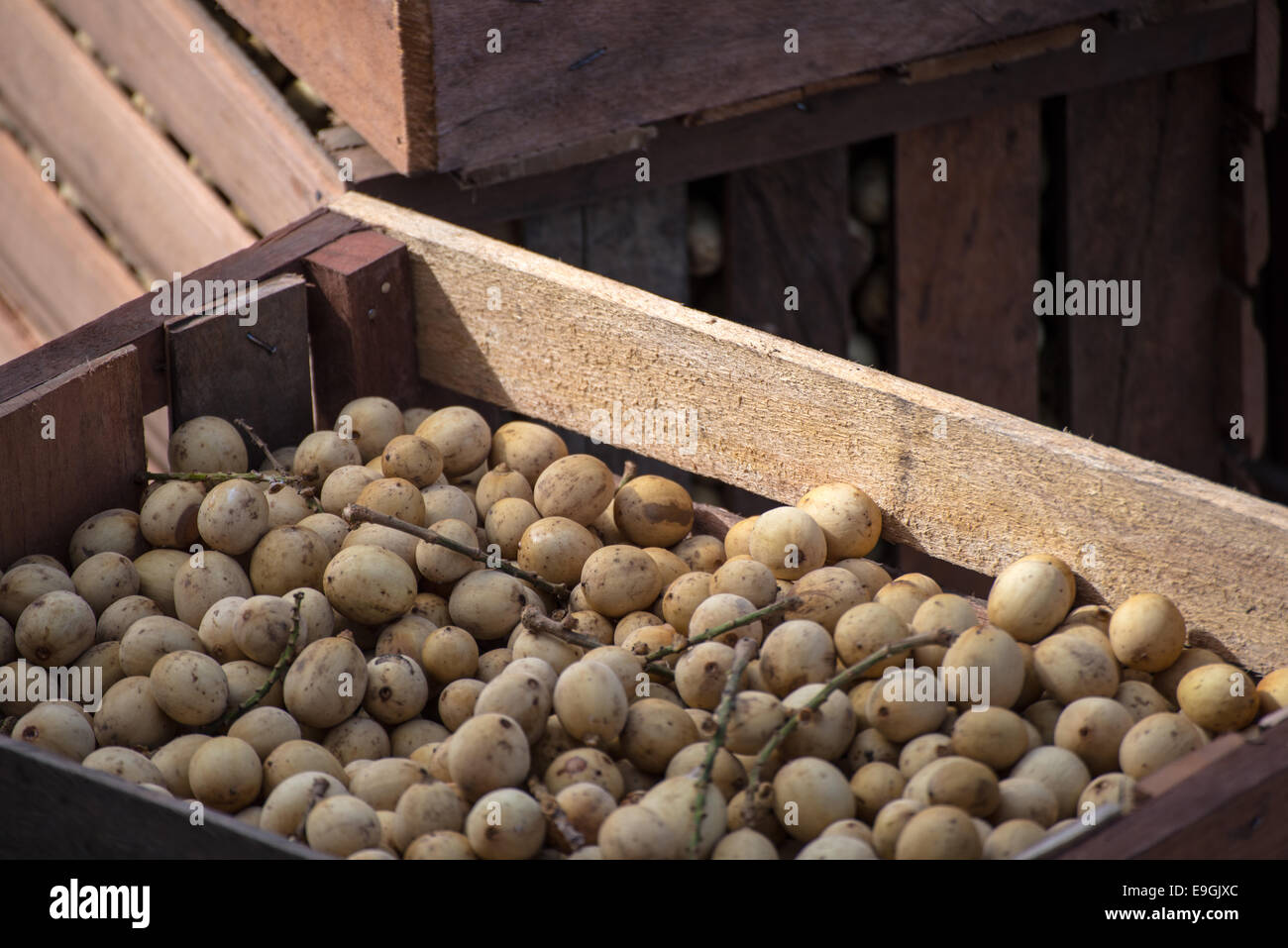 Bunch of longan tropical fruit stocked in wooden crates in indonesian market. Selective focus. - Stock Image