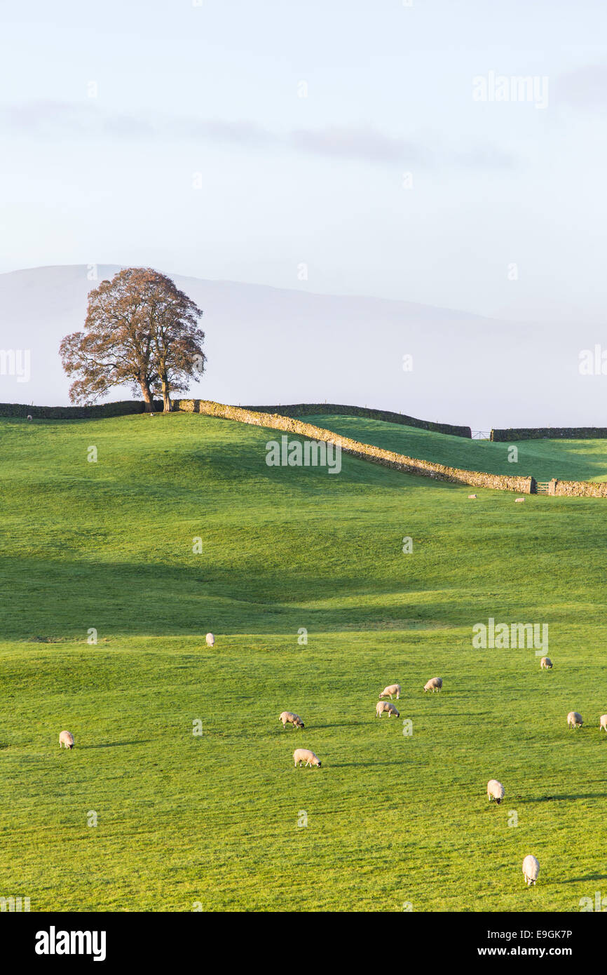 Dawn over Wensleydale, Yorkshire Dales National Park, North Yorkshire, England, UK Stock Photo