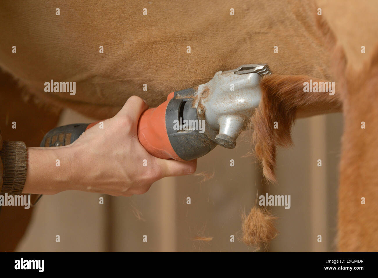 Clipping a horse - Stock Image