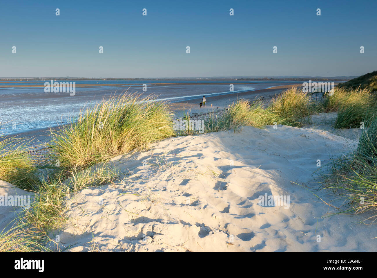 sand dunes and beach at west wittering west sussex uk early morning with the sun lighting up the sand couch and - Stock Image