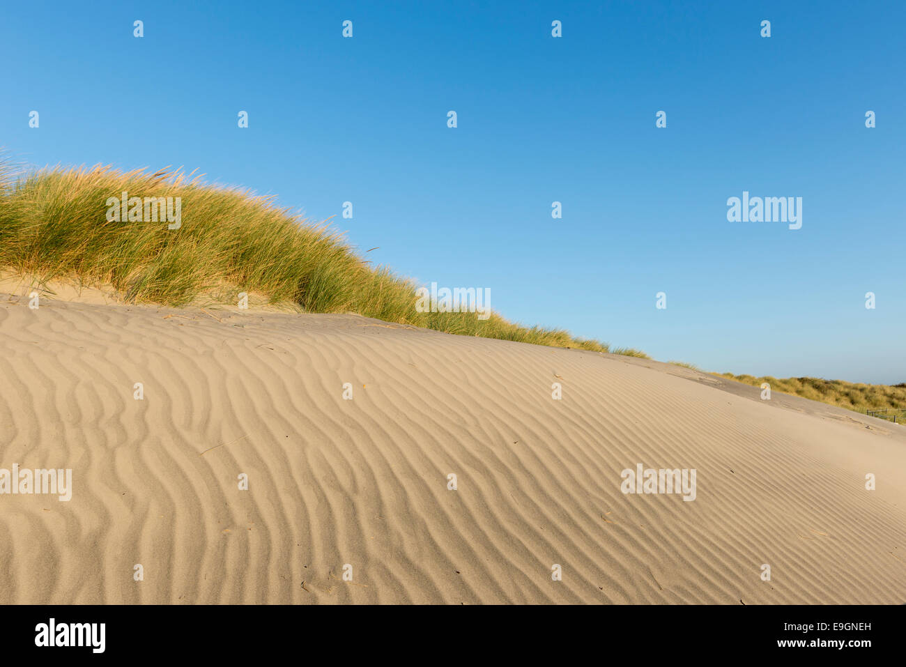 sand dune showing rippled patterns in the sand along with sand couch and marram grass against a clear blue sky, - Stock Image