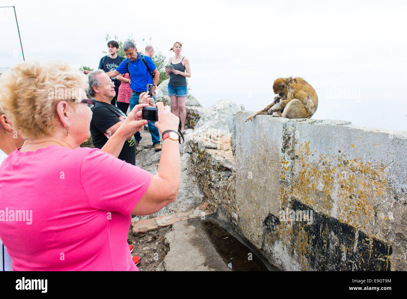 Tourists photographing the monkeys on the Rock of Gibraltar. - Stock Image