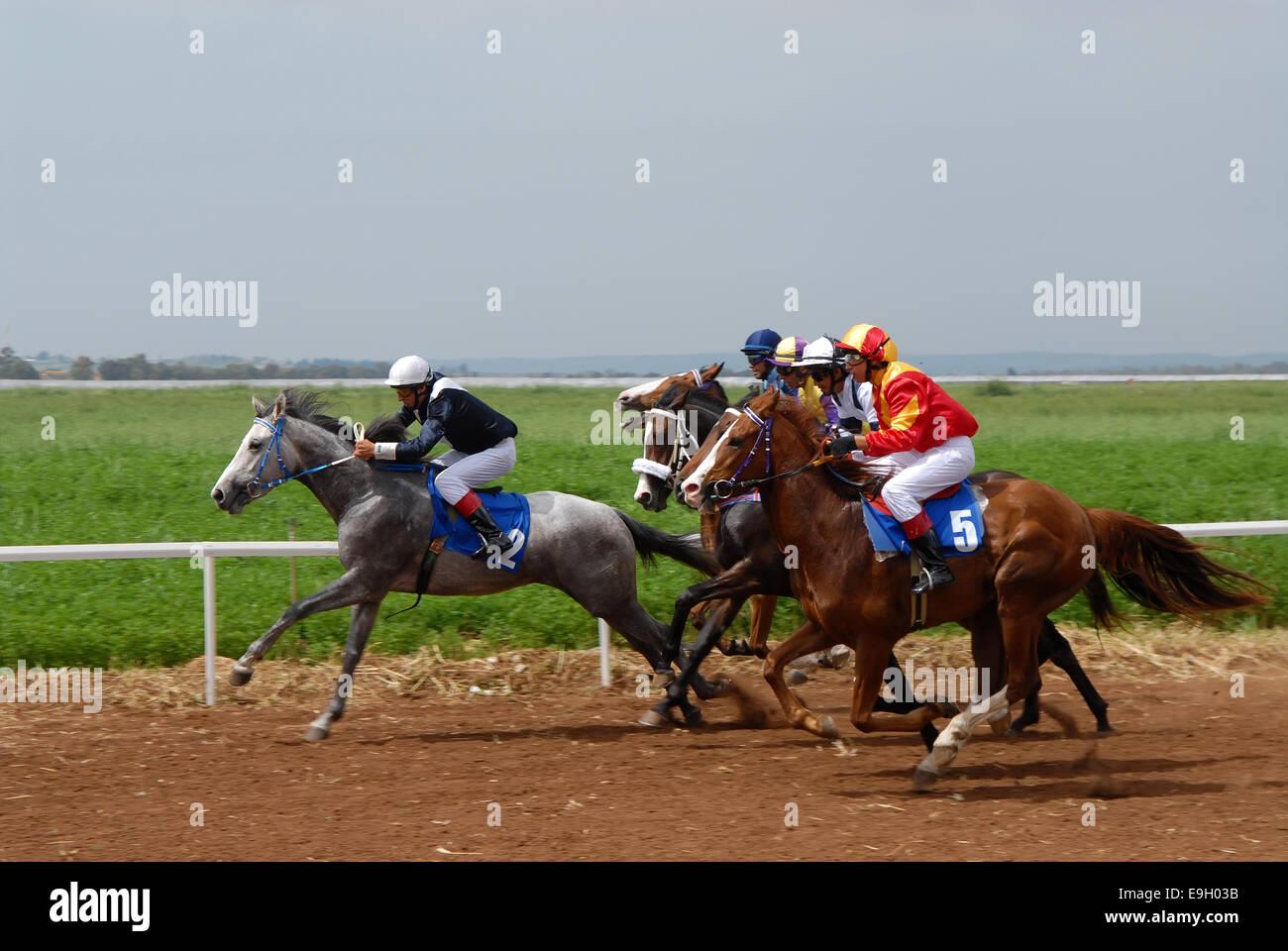 Horse race, Israel - Stock Image