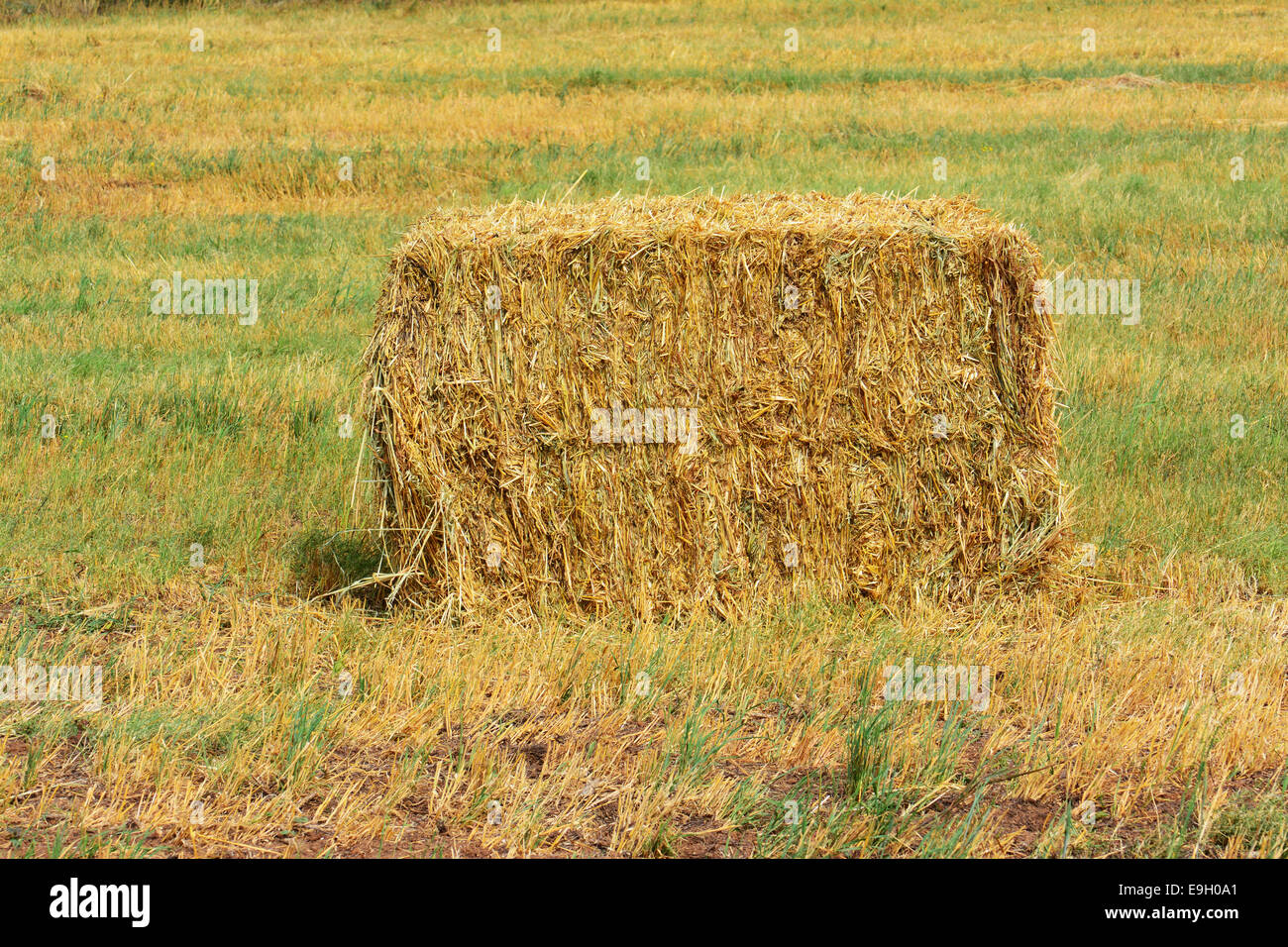 Straw bale in the field - Stock Image