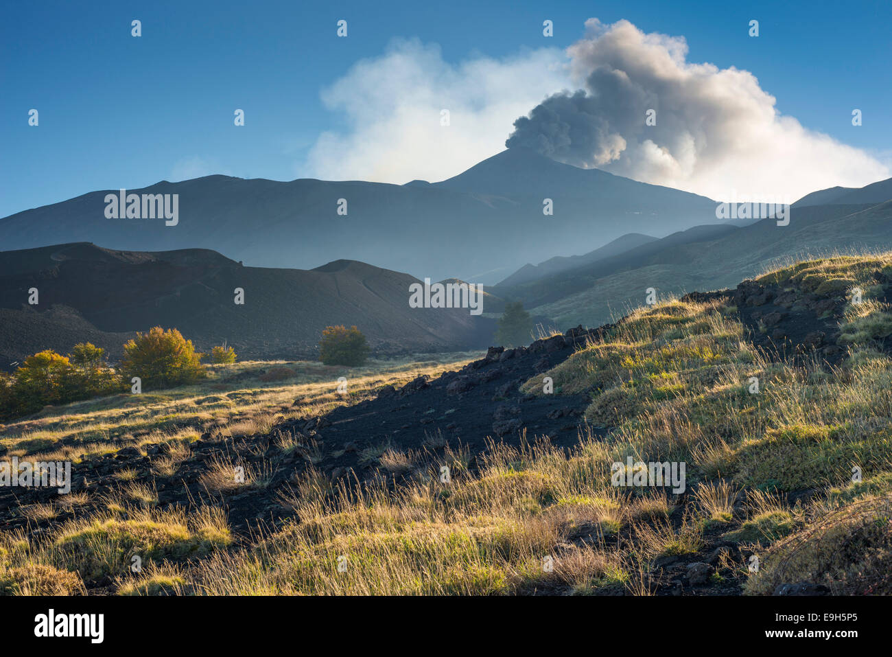 Eruption column above the new northeast Crater, in front a lava field with vegetation, north side, Mount Etna, in - Stock Image