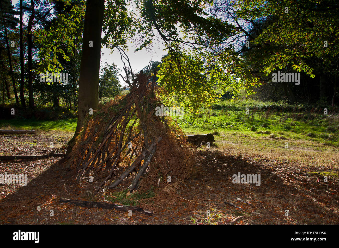 twig and branch shelter in the woods - Stock Image