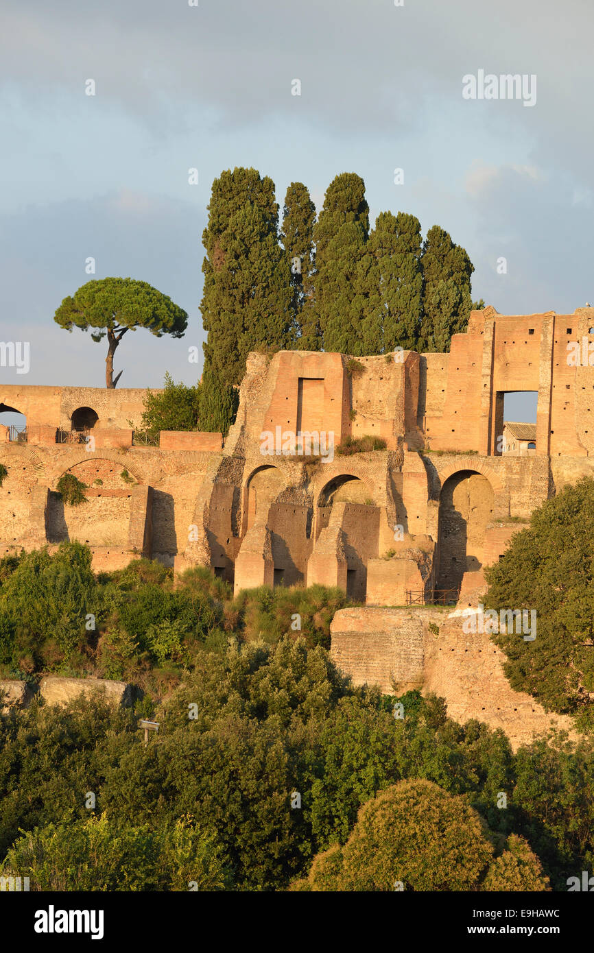 Ruins of Domus Augustana on Palatine Hill with Pines (Pinus pinea), Rome, Lazio, Italy - Stock Image