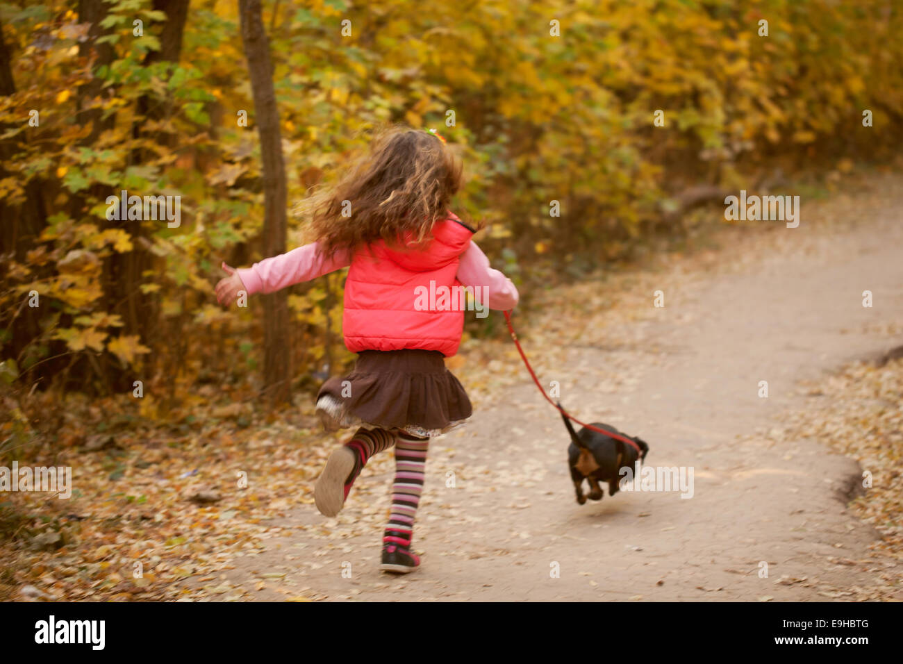 Little kid running and walking with a dachshund puppy. Love to animals concept - Stock Image