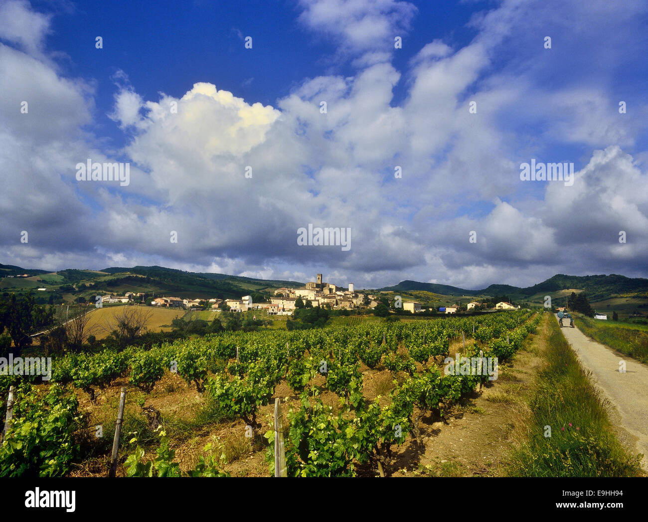 Vineyards at Villelongue-d'Aude. Aude department. France - Stock Image