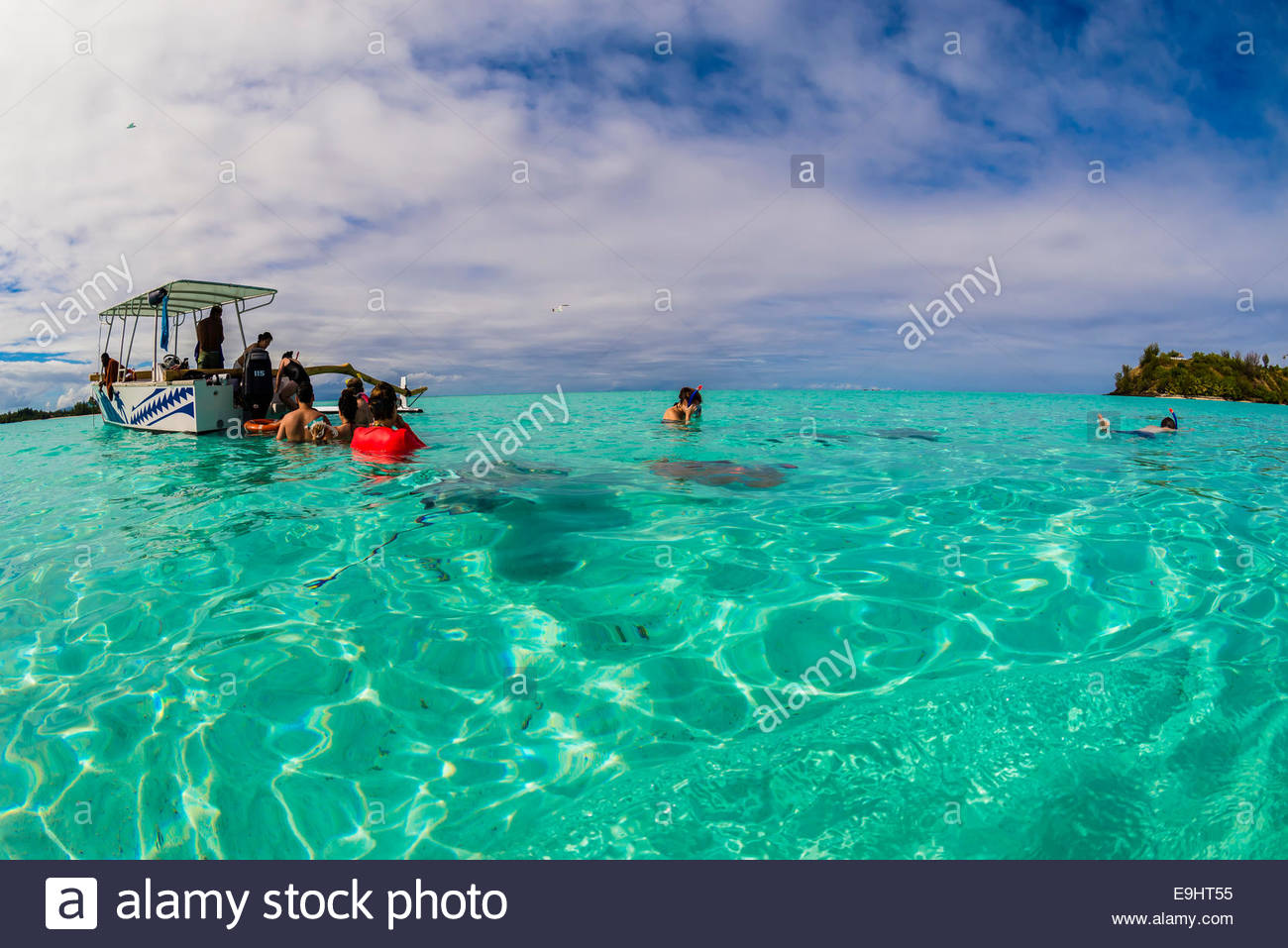 Swimming with stingrays off the island of Bora Bora, Society Islands, French Polynesia. - Stock Image