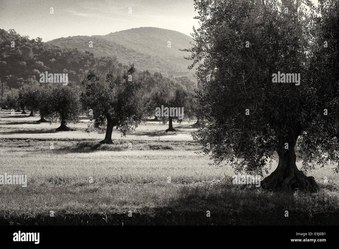 Scarlino is a comune in Grosseto Province in the Italian region Tuscany - Stock Image