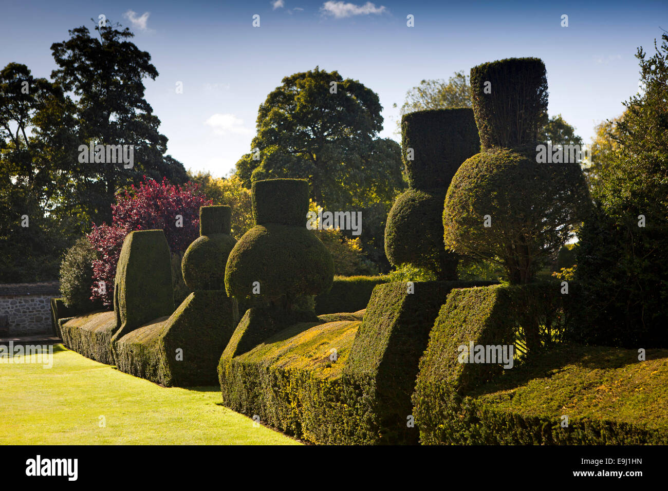 UK, England, Wiltshire, Avebury Manor gardens, topiary hedge - Stock Image