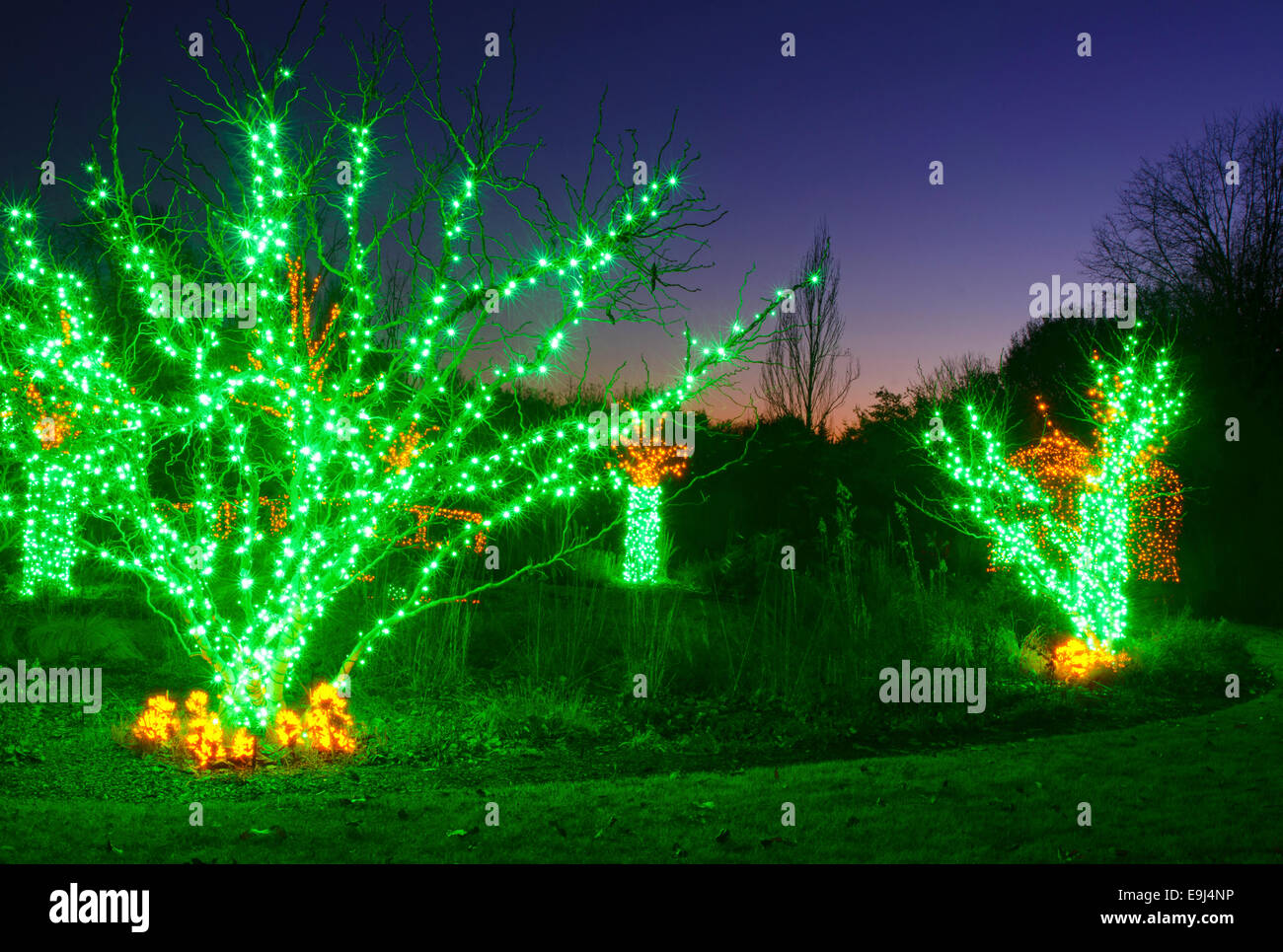 outdoor christmas trees have been decorated with green lights and
